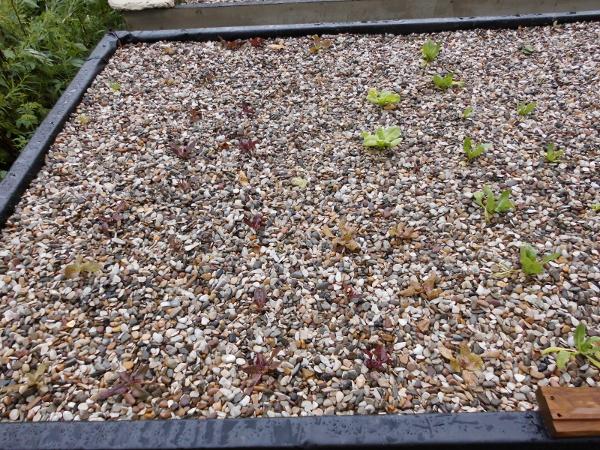 Beet2 mit alten Salatsorten