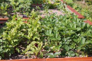 Rote Beete & Erdbeeren