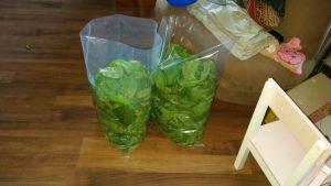 5kg geernteter Spinat